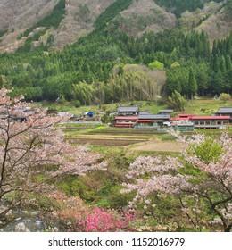 Cherry blossom in countryside in Gifu prefeture of the region Chubu, Japan.