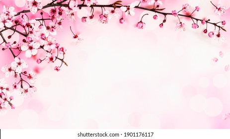 Cherry blossom. Creative banner with sakura spring flowers on pink background. Springtime composition. Holiday concept. Flat lay, top view, floral design