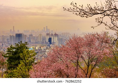 Cherry blossom in the early morning of spring in Namsan mountain with the buildings of Seoul city is in the background