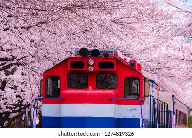 Cherry blossom festival at Gyeonghwa railway station.Jinhae,South Korea.