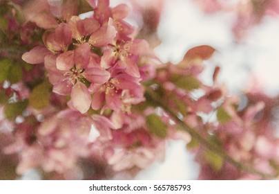 Cherry Blossom flower bokeh background. Modern, beautiful flat design for card or website.