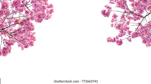 cherry blossom frame is on white background