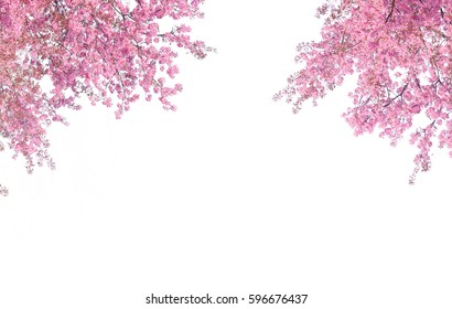 Cherry blossom frame use as background or for advertising in cherry blossom festival season