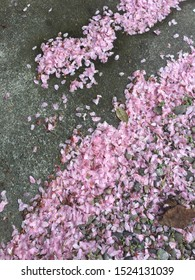 Cherry blossom gathered in a pile
