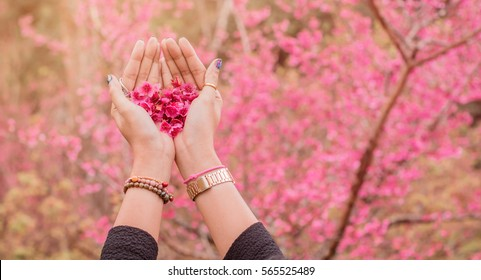 Cherry blossom heart shape in girl's hand at Sakura Garden.