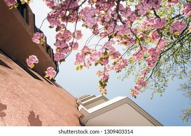 Cherry Blossom House