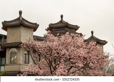 Cherry blossom landscape at Dongfang Temple, YangMingShan National Park, Taipei City, Taiwan.