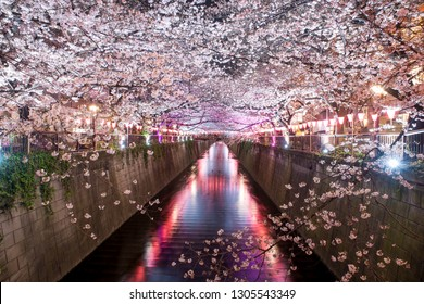 Cherry blossom lined Meguro Canal at night in Tokyo, Japan. Springtime in April in Tokyo, Japan.