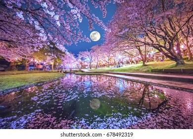 Cherry blossom, moon, Japan.