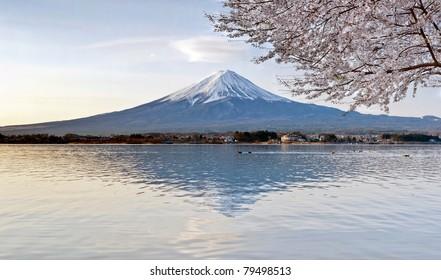 Cherry Blossom with Mt Fuji