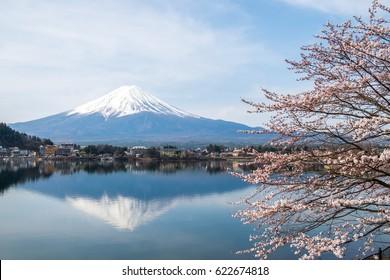 Cherry Blossom with Mt Fuji at lake Kawaguchiko