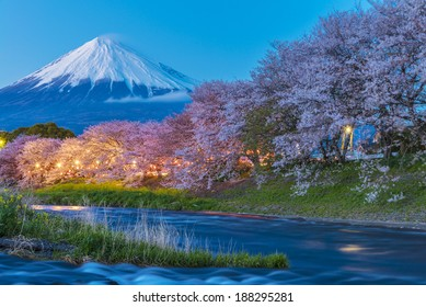 cherry blossom with MT Fuji on the background