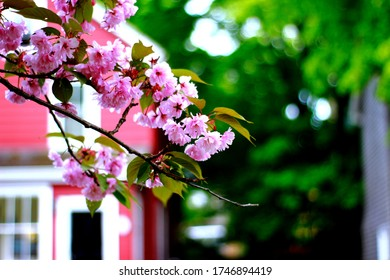 cherry blossom: Nature is so adorable