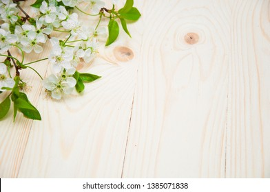cherry blossom on a wooden background