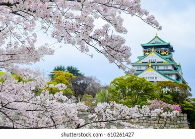 Cherry Blossom with the Osaka castle in background, Osaka, Japan