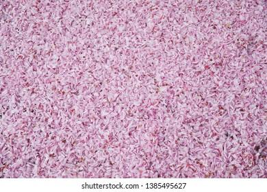 Cherry blossom petals on floor