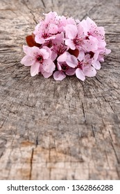 Cherry blossom. Sakura flowers.  Spring flowering branch on wooden background.