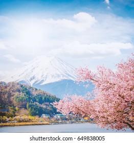 Cherry blossom Sakura and Fuji at Kawaguchiko Japan.