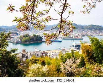 Cherry blossom (sakura) in spring season with the background of Onomichi city nearby Hiroshima, Japan
