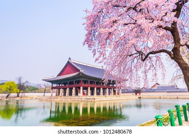 Cherry blossom of Spring in Gyeongbokgung Palace. Seoul, South Korea .