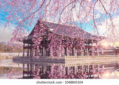 Cherry Blossom in spring at Gyeongbokgung Palace  Seoul,South Korea.