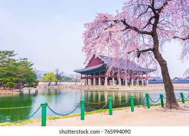 Cherry blossom of Spring in Gyeongbokgung Palace. Seoul, South Korea
