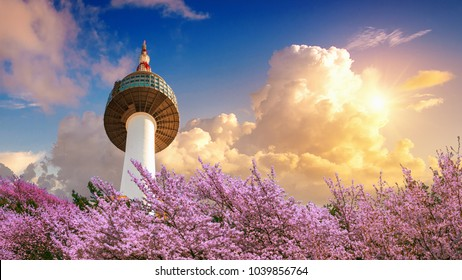 Cherry blossom in spring and seoul tower at sunset, Seoul in South Korea.
