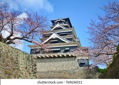 Cherry blossom in sunny day at Fukuoka castle,Japan.