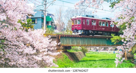 Cherry Blossom with Train in Shukugawa Park - Famous scenic of Cherry Blossom in Nishinomiya City, Hyogo Prefecture, Japan.