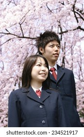 Cherry Blossom Tree and Boys and Girls in School Uniform