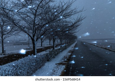 Cherry blossom trees, snow tunnel at sunset