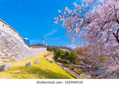 Cherry Blossom View of Namsan Seoul Tower castle walls, taken in seoul south korea.