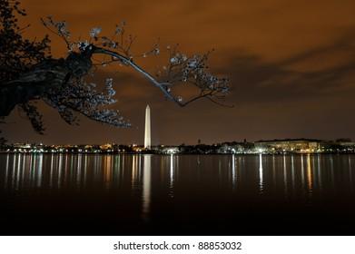 Cherry blossom in Washington DC at night