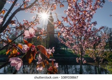 Cherry blossoms against bright sunlight with silhouette of Turku Cathedral in background in Turku, Finland