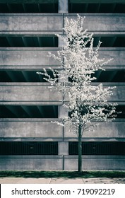 Cherry blossoms against the concrete of a parking garage.