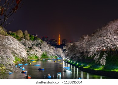 Cherry blossoms around Chidorigafuchi, Tokyo, Japan. The northernmost part of Edo Castle is now a park name Chidorigafuchi. People boating and enjoy at sakura cherry blossom at Chidorigafuchi Park.