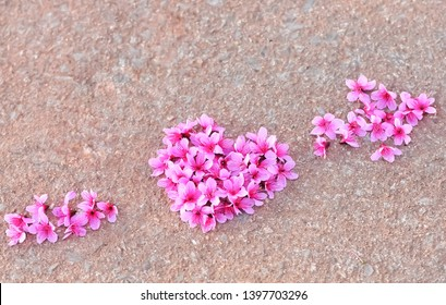 Cherry blossoms are arranged in a heart shape .Lay on the floor