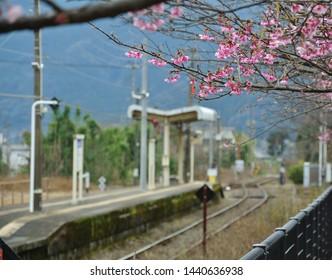 Cherry blossoms beside the Kitago station , Miyazaki