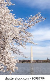 Cherry blossoms in bloom on the Tidal Basin with Washington Monument in Washington DC