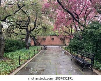 Flores de cerezo florecen en un parque en un día lluvioso