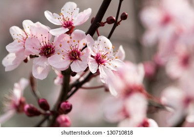 cherry blossoms bouquet