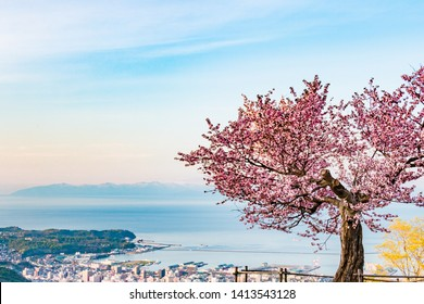 Cherry blossoms, cityscapes and the sea Otaru City Hokkaido Japan Mt. tengu