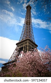 Cherry blossoms at the Eiffel tower in Paris, France