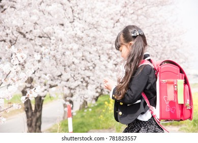 Cherry blossoms with elementary school girls