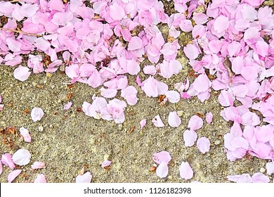 Cherry blossoms falling on the ground in Japan. This image was blurred or selective focus.