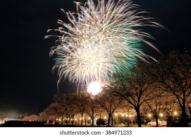 Cherry blossoms and Fireworks