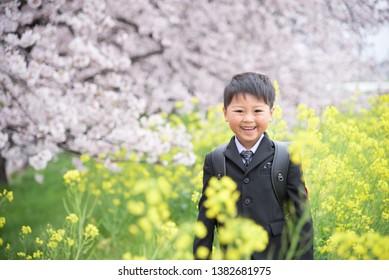 Cherry blossoms flowers elementary school high