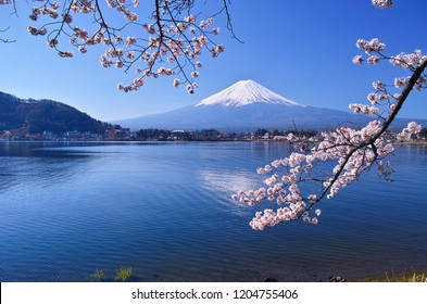 Cherry blossoms in full bloom seen from Ubuyagasaki on the northern coast of Kawaguchiko and Mount Fuji