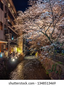 Cherry blossoms at Gion Shirakawa lit up in an illumination event during nighttime, famous for the scenery of a cobblestone path running along ancient town houses and the view of the Shirakawa River.
