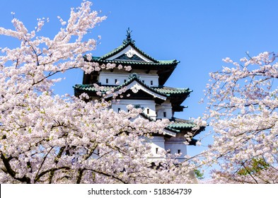 Cherry blossoms at the Hirosaki Castle Park in Hirosaki, Aomori, Japan